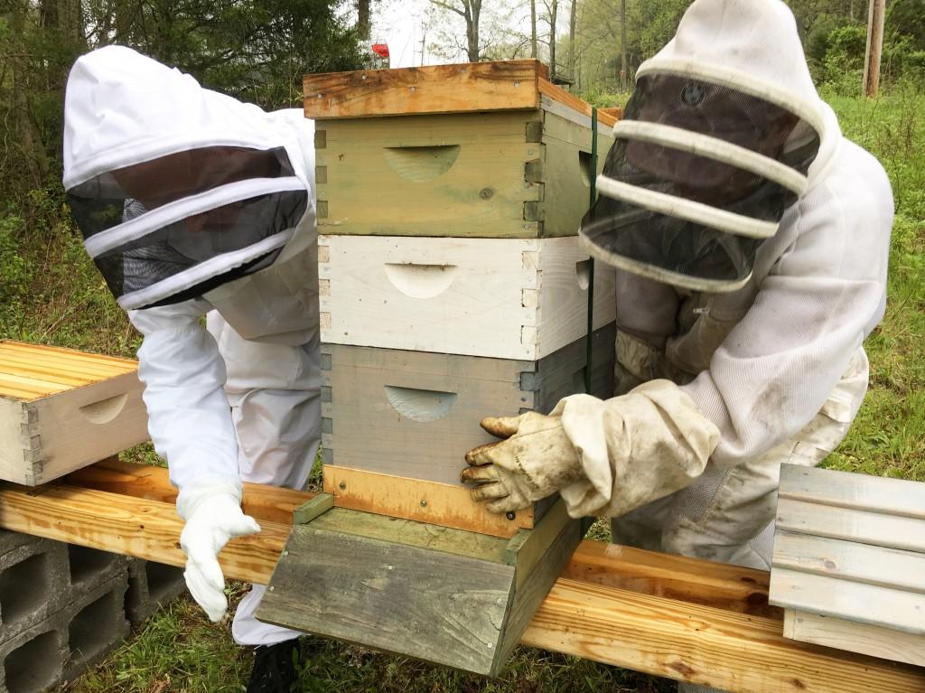 Bees Half Hill Farm
